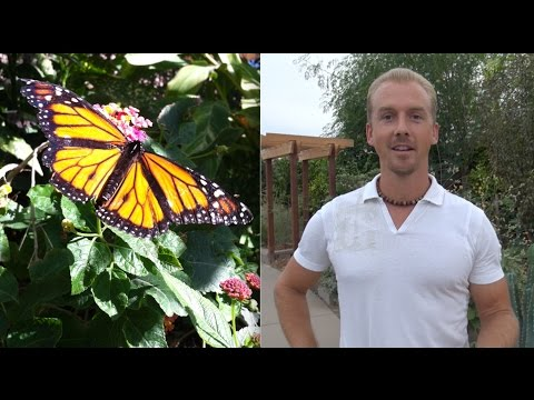 My Favorite Desert Plants for Arizona Gardening - Monarch Butterfly's & Bees