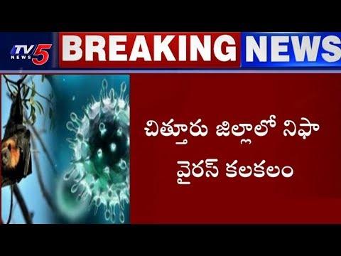 చిత్తూరు జిల్లాలో నిఫా వైరస్ కలకలం | Nipah Virus In Chittoor District | TV5 News