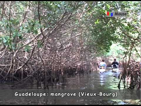 Guadeloupe: mangrove Vieux-Bourg (travel clip)