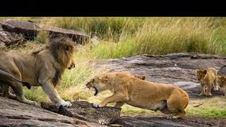 Львы-людоеды