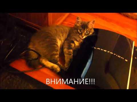 Прикольное видео. Наша кошка Мурка греется на Sony Playstation 3 PS3