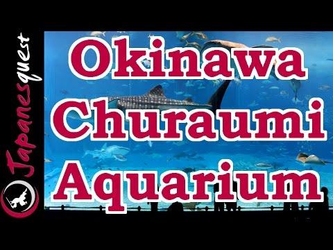 Okinawa Churaumi Aquarium - Your Best Japan Guide