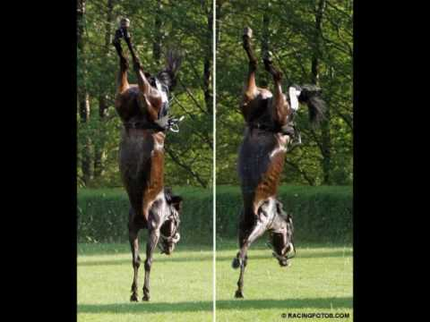 Amazing Horse - Weebl's Stuff Faster ^^ video