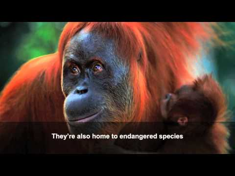 Palm oil: how our consumer choices affect wildlife