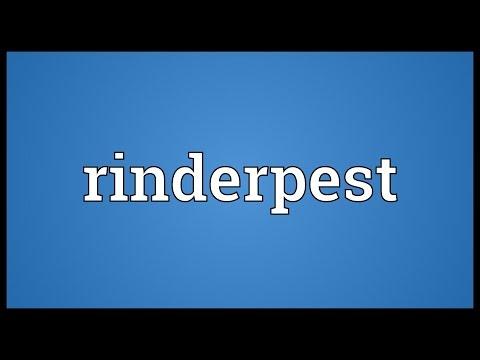 Header of rinderpest