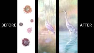 Heron Time Lapse