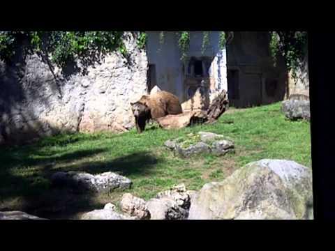 Un giorno al bioparco di Roma con Max Giusti – 07/04/2013