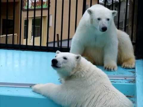 閉園時のイコロとキロル☆おびひろ動物園