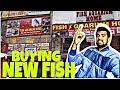 Buying new fish from fish aquarium home delhi