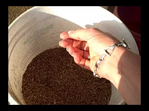 Feeding Your Horse Beet Pulp: How and Why