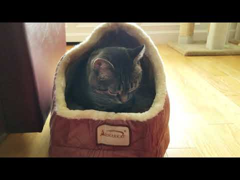 Tacy Cat Approves of Her New Armarkat Cave Cat Bed