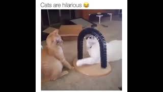 Funny cats 🐈🐈 Amazing clips ||