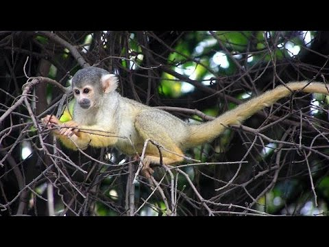 Dozens of ill-treated monkeys rescued in South Africa