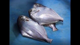 병어회, 밴뎅이회, 방풍나물-이런곳에 횟집이? / 인천 유일의 갯벌포구 북성포구! butter fish [맛있겠다 Yummy]