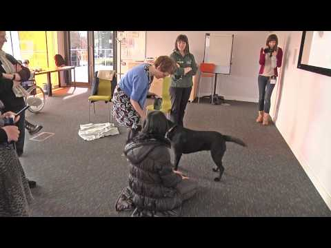 Technology for dogs to assist humans in the home