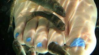 Красота и здоровье 16 09 2014 пробуем рыбок гарра руфа