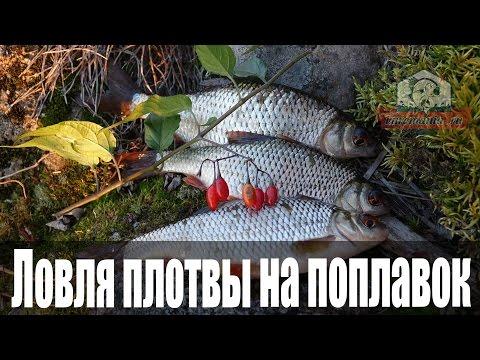 ловля плотвы на поплавок на малых реках
