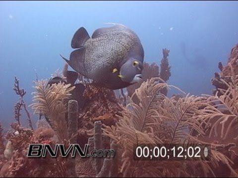 5/15/2004 French Angelfish Dry Tortugas TER