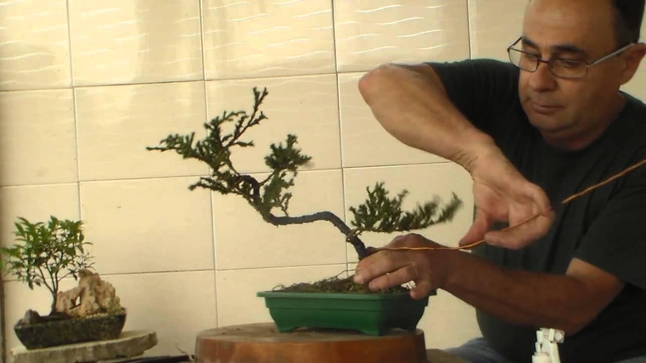 Como fazer bonsai muda jovem vasos e pedras para bonsai e for Como cultivar bonsais