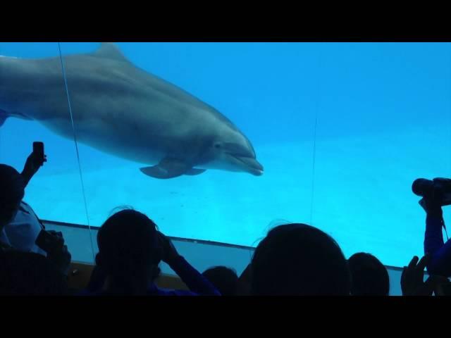 Nacimiento de un Delfín en Dolphin Adventures