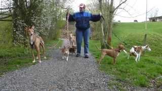 Gassigehen mit SECHS Hunden - ich kann ja NIX, ich bin ja behindert