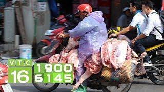 Dịch tả lợn Châu Phi: Tấp nập vận chuyển lợn giữa tâm bão I VTC16