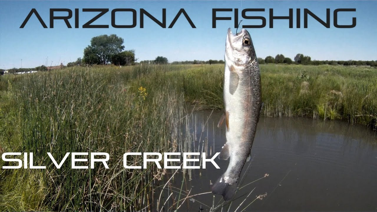 Trout fishing at silver creek show low arizona youtube for Silver creek fishing report