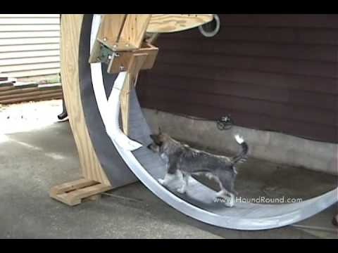 Dog Powered Treadmill For Sale