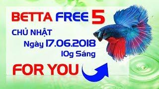 BETTA FREE 5 - SỚM HƠN DỰ KIẾN 28 NGÀY