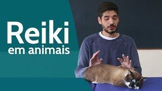 Os Animais aceitam receber Reiki?