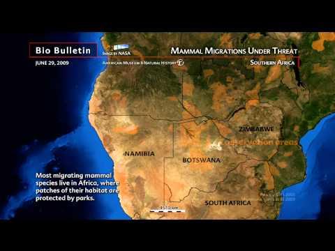 Science Bulletins: Mammal Migrations under Threat