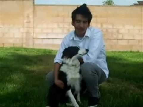 Cesar Millan Dog Training Application