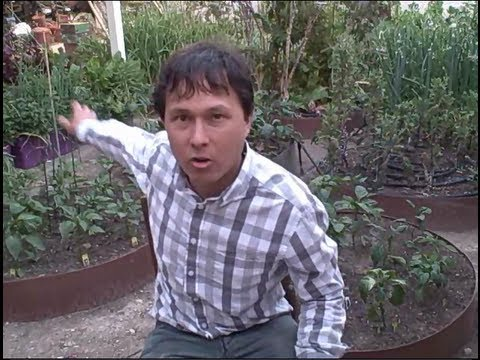 How to Grow a Raised Bed over Cement or Asphalt & more Organic Gardening Q&A