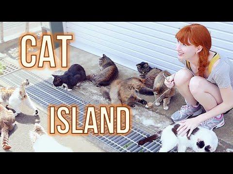 CAT ISLAND in Japan! 猫島 (宮城県) Tashirojima
