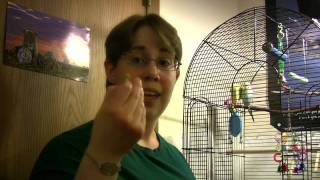 Parakeet Target Training Part 1