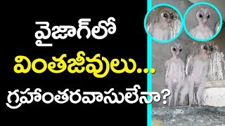 Aliens in Vizag-విశాఖలో వింతజీవులు-Aliens Found in vizag-Top Telugu Media