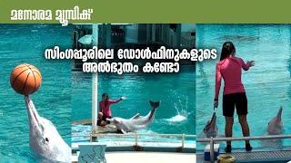 സിംഗപ്പൂരിലെ ഡോള്ഫിനുകളുടെ അല്ഭുതം കണ്ടോ - Singapore Dolphin Show at Sentosa Island