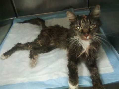 Libby - The inspirational story of a neglected cat