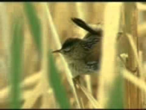 Bishnupriya Manipuri Song : Gopati Maloti ..................... Singer : Suniti Sinha, Bangladesh. video