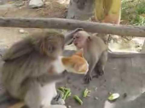 ПОЛНЫЙ РЖАЧ!!! Кошка и Обезьяна подружились (Monkey adds cat as a FRIEND)