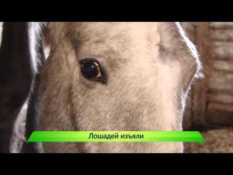 Спасение лошадей. ИК Город 27.10.2015