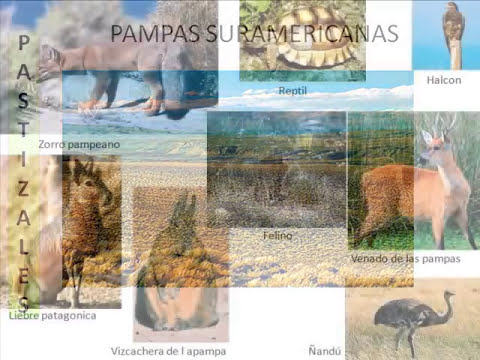 Ecosistemas Terrestres o Biomas