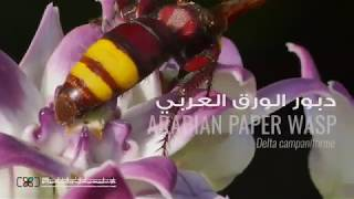 HIPA Wild Emirates - DESERT INSECTS