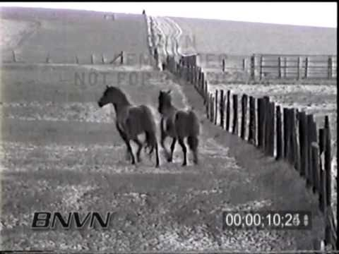 5/24/1998 Horse trapped in a hail storm video
