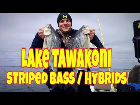 Tawakoni Stripers Hybrids Dead Sticking and Birds at Lake Tawakoni Guide Service 903-441-3937
