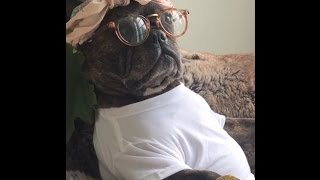 Napping Dog Wakes Up For Beyonce Tickets