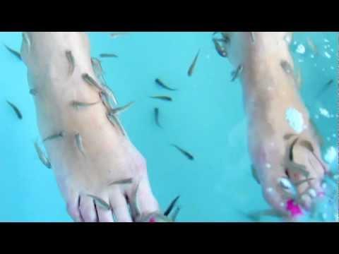 Garra Rufa Fish Spa - Toque X