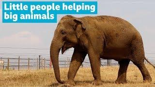 Schoolgirl helping protect elephants
