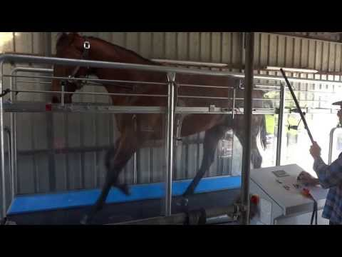 Horse Gym Australia - Peter Gelagotis Racing Stables - Training Session