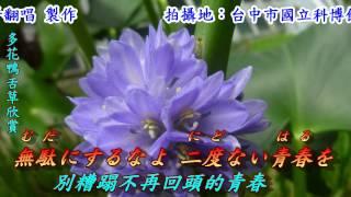 浮草ぐらし 漂泊的生活 1981 日語 都 はるみ 翻譯 銘哥翻唱